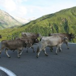 Waiting Furka Pass